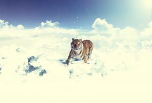 snowcloudstiger
